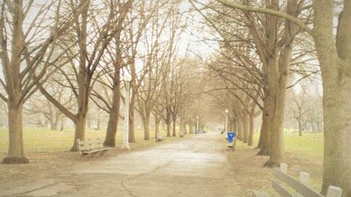Tree-lined Path (2)