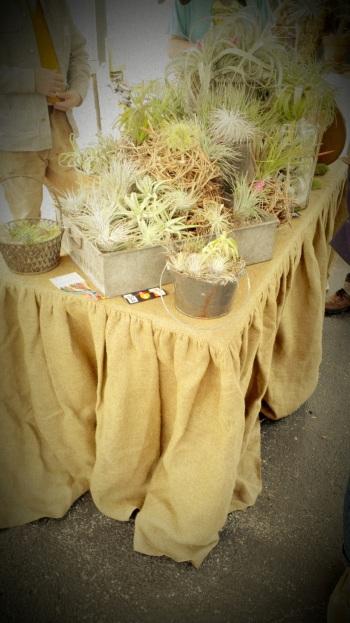 Succulent Plants (1)