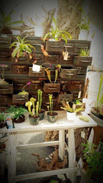 Succulent Plants (2)