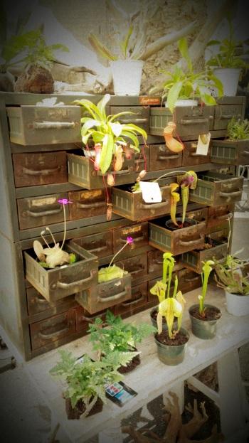 Succulent Plants (3)