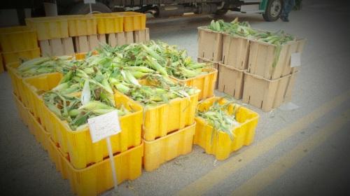 Sweet Corn (1)