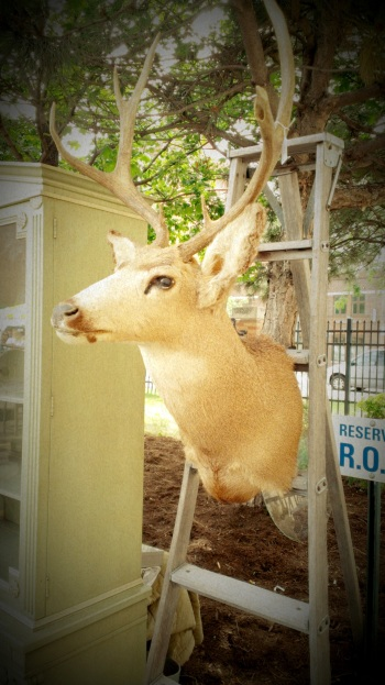 Animals & Antlers (1)
