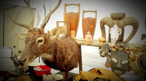 Animals & Antlers (2)