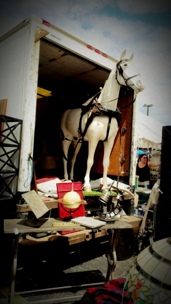 Horse in Trailor