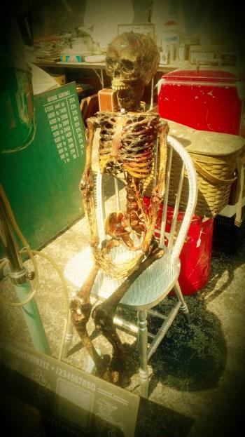 Skeleton (1)